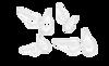 Immagine di Matrice Tofflemire trasparente bombata / Molare 0,075 / 6,3 mm